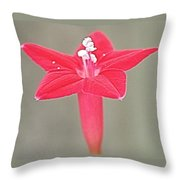 The Beauty Of One Throw Pillow