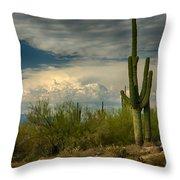 The Beauty Of The Desert Southwest  Throw Pillow