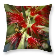 The Bee And Bottlebrush Throw Pillow