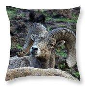 The Bighorn Throw Pillow