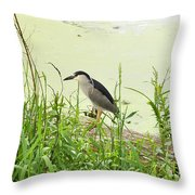The Black-crowned Night Heron Throw Pillow