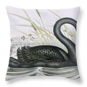 The Black Swan Throw Pillow by John Gould