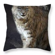 The Bobcat Throw Pillow by Saija  Lehtonen