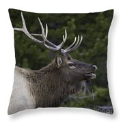 The Bugle Throw Pillow