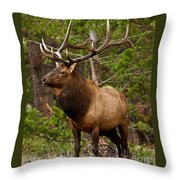 The Bull Elk Throw Pillow