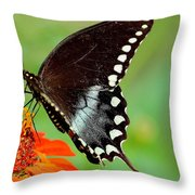 The Butterfly And The Zinnia Throw Pillow