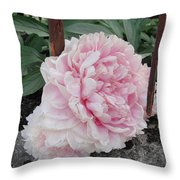 The Buxom Cabbage Rose Throw Pillow