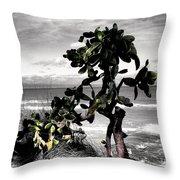 The Catus Tree Siesta Key Florida Throw Pillow