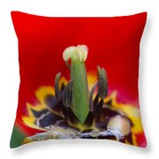 The Center Of Attention Throw Pillow