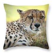 The Cheetah In Grass Throw Pillow by Chad Davis