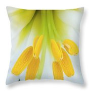 The Christmas Lilly Throw Pillow