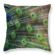 The Colours Of The Peacock Throw Pillow