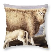 The Cotswold Breed Throw Pillow