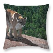 The Cougar 1 Throw Pillow