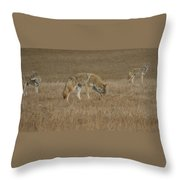 The Coyotes Throw Pillow