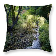 The Creek At Finch Arboretum 2 Throw Pillow