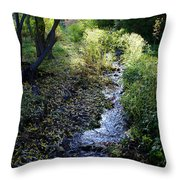 The Creek At Finch Arboretum Throw Pillow