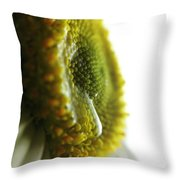 The Crying Daisy Throw Pillow by Stephanie  Varner