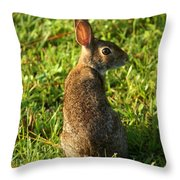 The Curious Rabbit Throw Pillow
