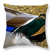 The Curl Throw Pillow
