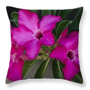The Desert Rose  Throw Pillow