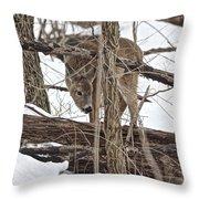 The Doe And The Snow - Odocoileus Virginianus Throw Pillow