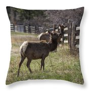 The Elk In Town Throw Pillow