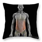 The External Oblique Muscles Throw Pillow
