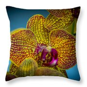 The Face Of Color Throw Pillow
