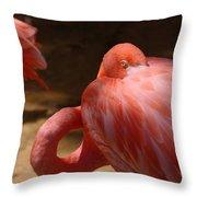 The Flamingo Wakens Throw Pillow