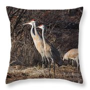 The Gathering...sandhill Cranes Throw Pillow