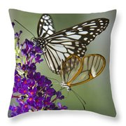 The Glasswing And A Friend  Throw Pillow