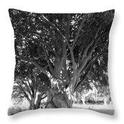 The Grandmother Tree Throw Pillow