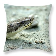 The Gray Eastern Rat Snake Right Side Head Shot Throw Pillow