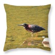 The Green Heron Eyes His Prey Throw Pillow