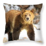 The Grizzly Strut Throw Pillow