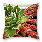 The Hen And Her Chicks  Throw Pillow