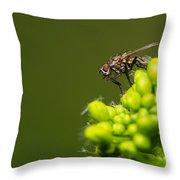 The Hidden World Of Khaki - Featured 3 Throw Pillow