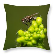 The Hidden World Of Khaki Square - Featured 3 Throw Pillow