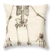 The Human Skeleton Throw Pillow