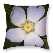 The Humble Dog Rose Throw Pillow
