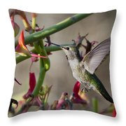 The Hummingbird And The Slipper Plant  Throw Pillow