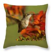 The Hummingbird Turns   Throw Pillow