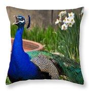 The Indian Peafowl Throw Pillow