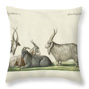 The Kashmir Goats Introduced In France Throw Pillow