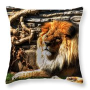 The King Lazy Boy At The Buffalo Zoo Throw Pillow
