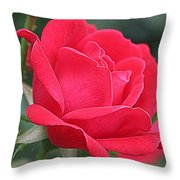 The Last Rose Of Spring Throw Pillow