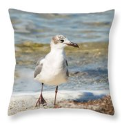 The Laughing Gull Strut Throw Pillow