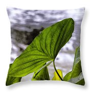 The Leaf Of A Water Plant Throw Pillow