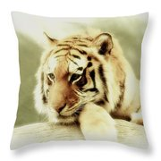 The Lion At Rest Throw Pillow